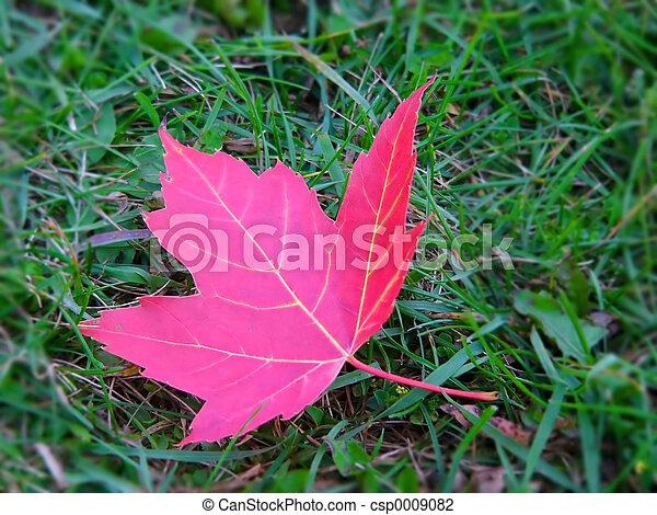 leaf - csp0009082