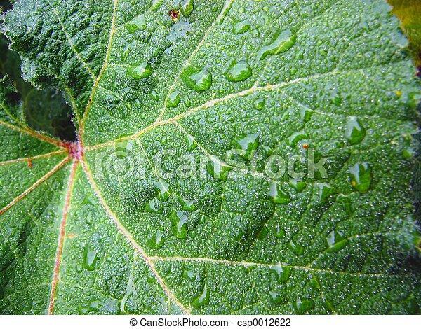 leaf - csp0012622