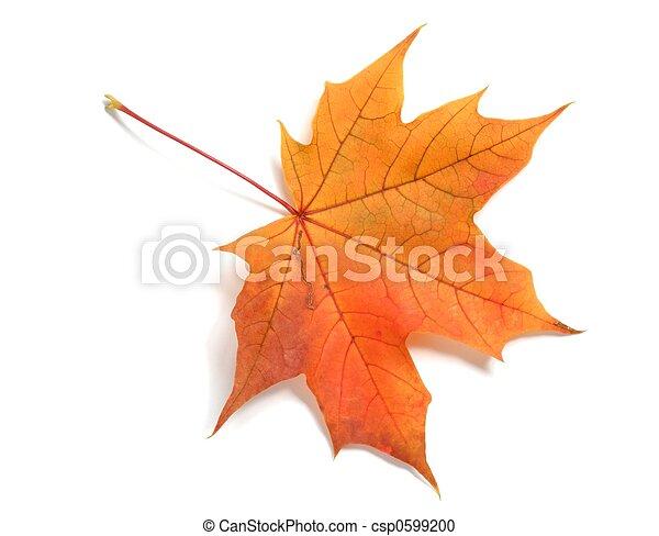 Leaf - csp0599200