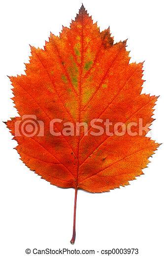Leaf - csp0003973