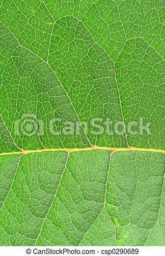 leaf texture - csp0290689