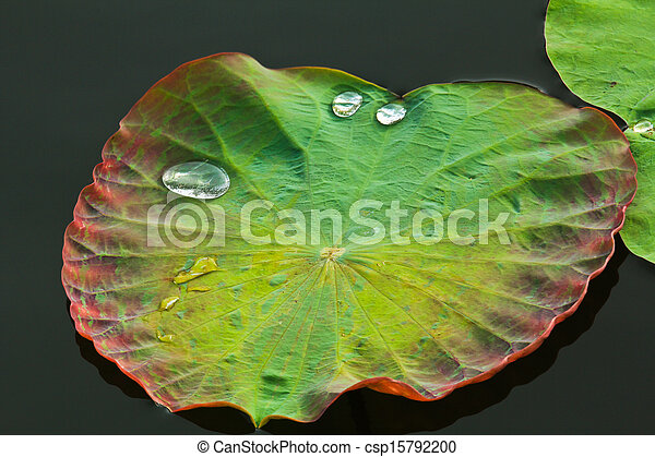 Leaf with Water Drops - csp15792200