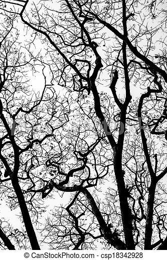 Leafless branches isolated on white background - csp18342928