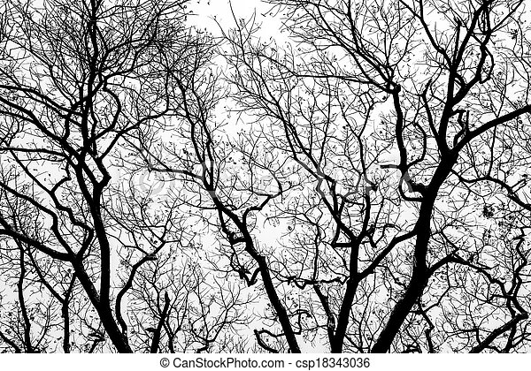 Leafless branches isolated on white background - csp18343036