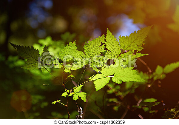 leafs in forest light