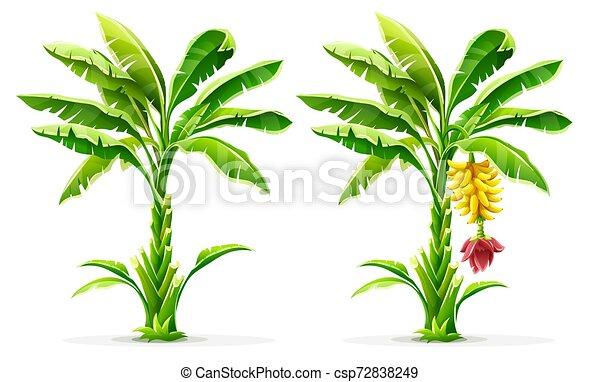 Palmeras tropicales con frutas y hojas. Vector. - csp72838249
