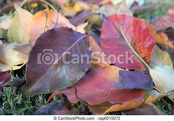Leaves 2 - csp0015072