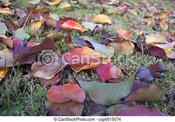 Leaves 3 - csp0015074
