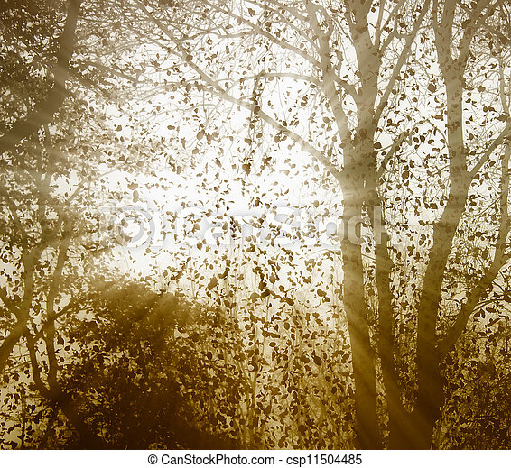leaves fall - csp11504485