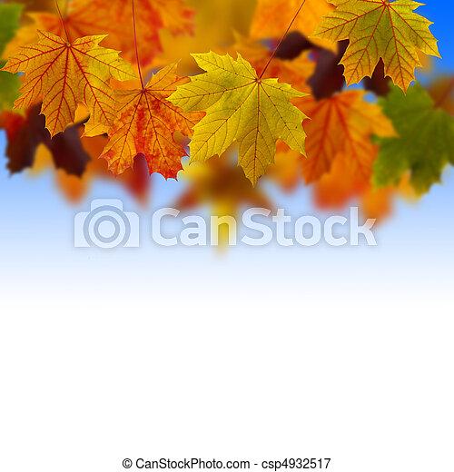 Leaves fallen in the sky - csp4932517