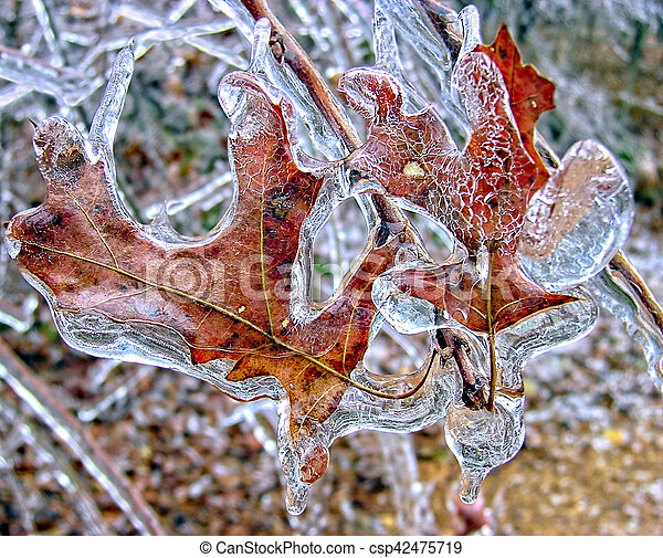 Leaves Frozen in Ice - csp42475719