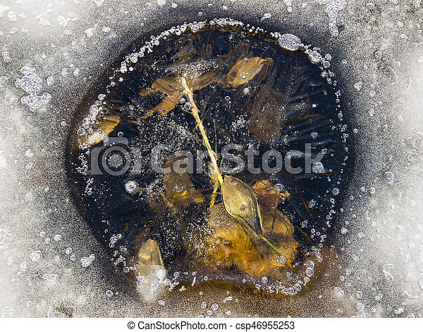 Leaves frozen in ice - csp46955253
