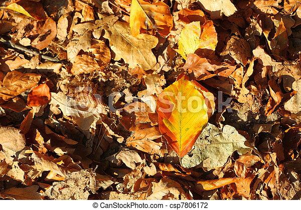 leaves, golden autumn - csp7806172