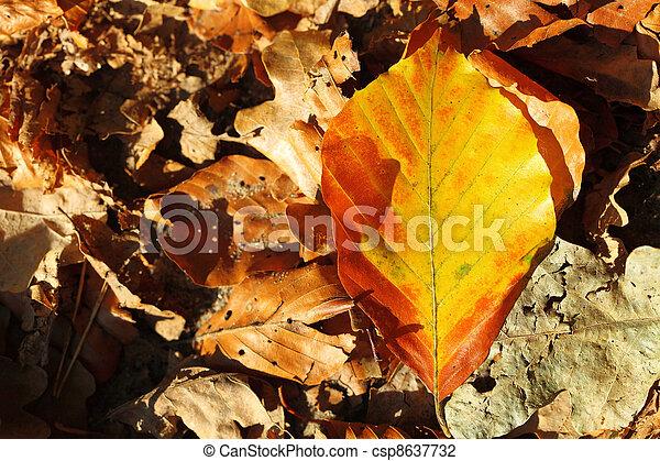 leaves, golden autumn - csp8637732