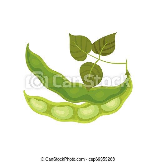 Dos semi judías con hojas. Ilustración de vectores sobre fondo blanco. - csp69353268