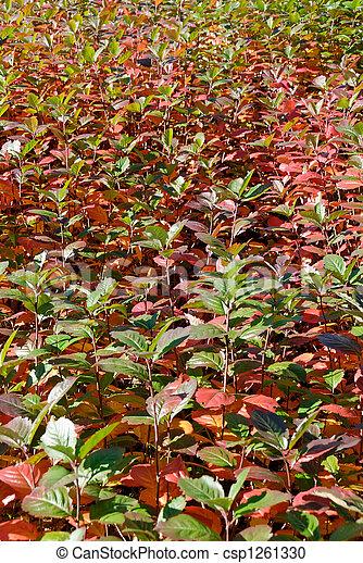 Leaves in Autumn  - csp1261330