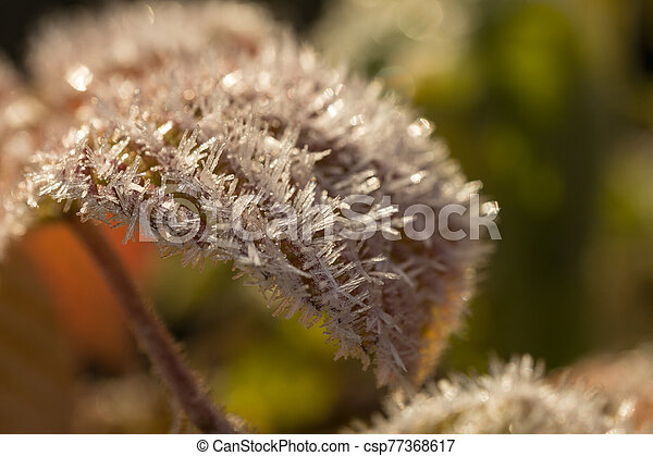 leaves in hoarfrost closeup - csp77368617