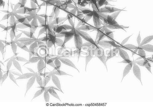 Leaves in Soft Light - csp50458457