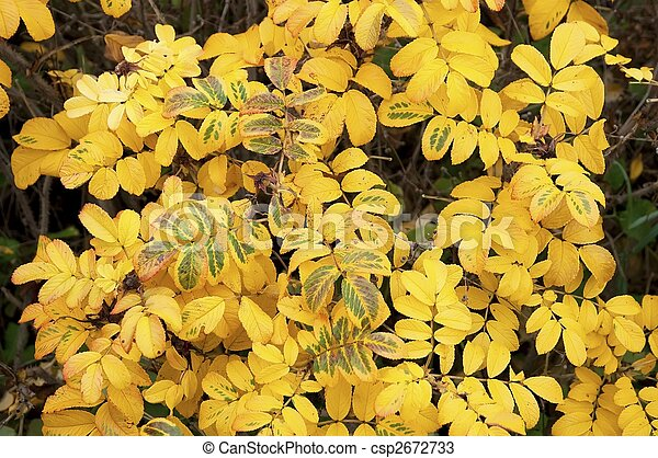 Leaves in the autumn - csp2672733