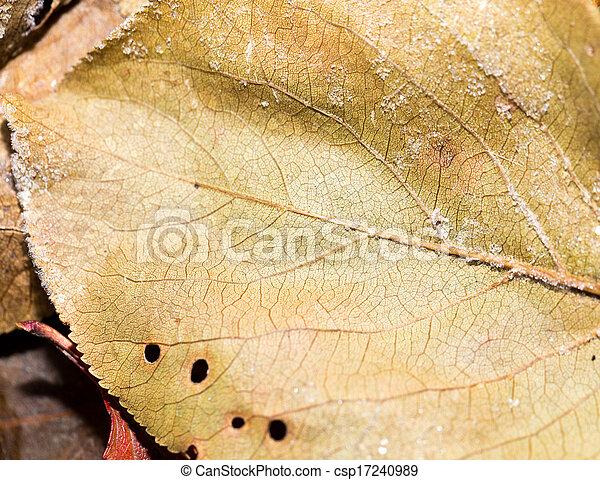 leaves in the snow. macro - csp17240989