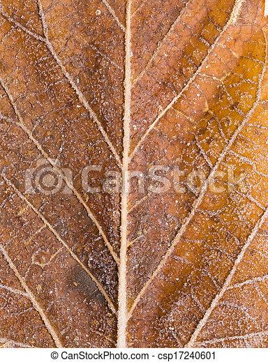 leaves in the snow. macro - csp17240601