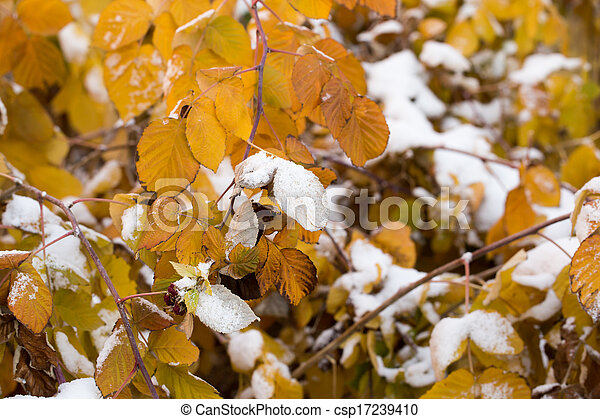 leaves in the snow outdoors - csp17239410
