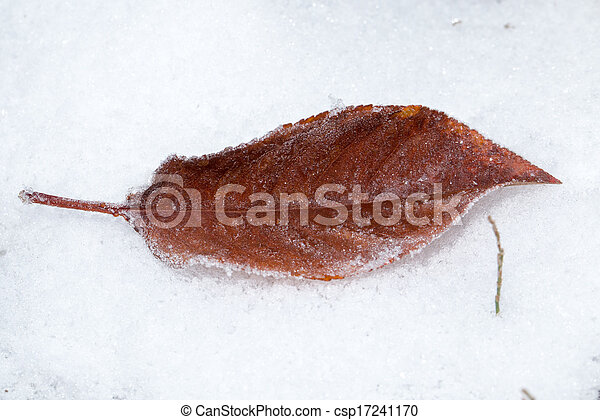 leaves in the snow outdoors - csp17241170