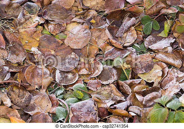 leaves in the snow outdoors - csp32741354