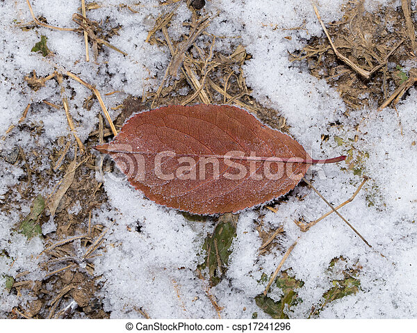 leaves in the snow outdoors - csp17241296
