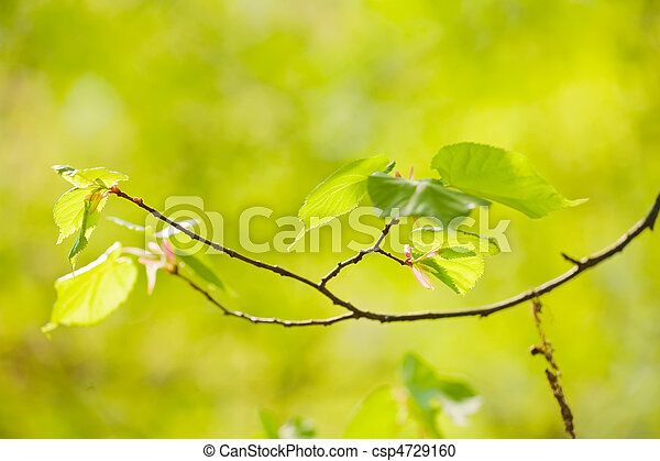 leaves in the sunshine - csp4729160