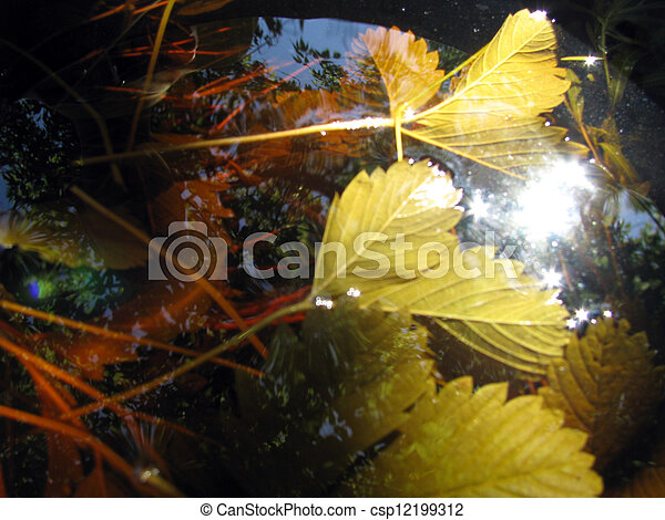 Leaves in the water - csp12199312
