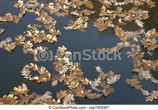 Leaves in the water - csp7452467