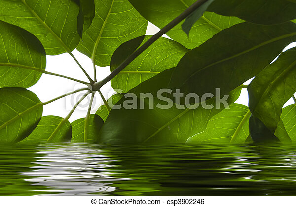 Leaves in the water - csp3902246