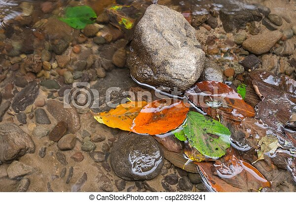 Leaves in the water - csp22893241
