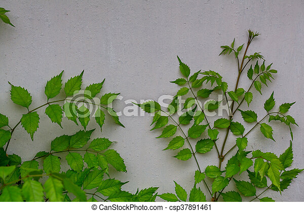 Leaves in wall - csp37891461