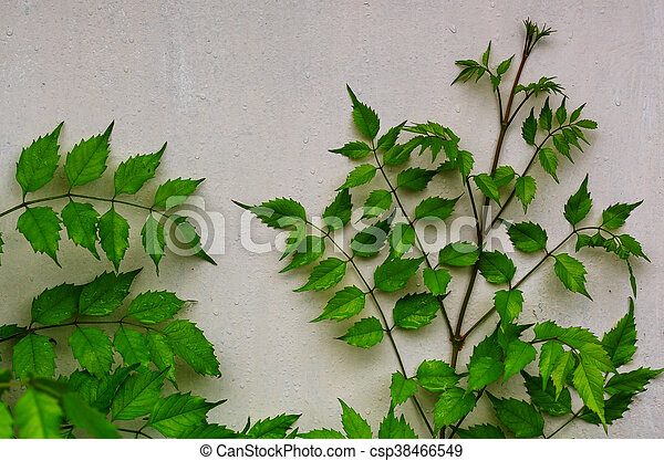 Leaves in wall - csp38466549
