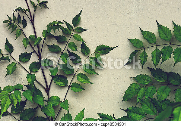 Leaves in wall - csp40504301