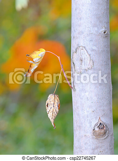 leaves isolated  - csp22745267
