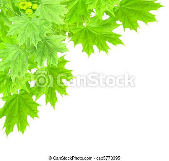 Leaves of a maple - csp5773395