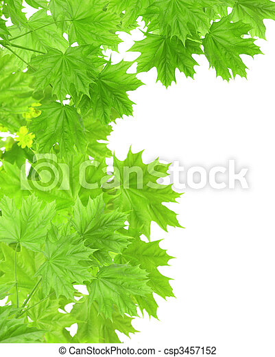 Leaves of a maple - csp3457152