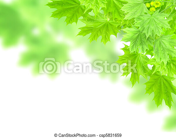 Leaves of a maple - csp5831659