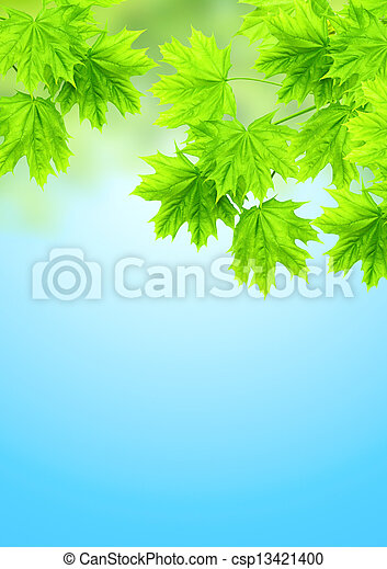 Leaves of a maple - csp13421400