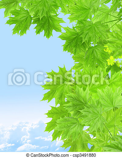 Leaves of a maple - csp3491880
