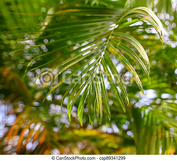 Leaves of palm trees in the park - csp89341299