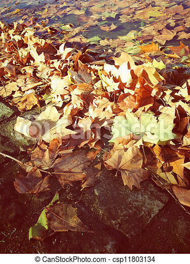 Leaves of the fall - csp11803134