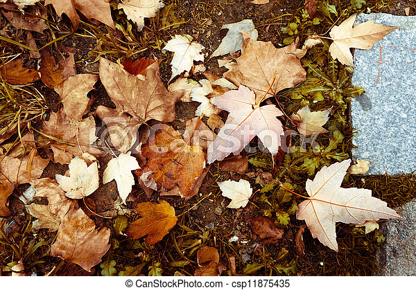 Leaves of the fall - csp11875435