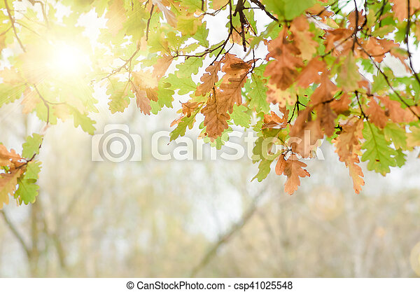 leaves of the oak tree in nature fall - csp41025548