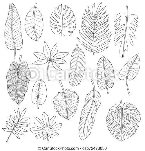 Leaves Of Tropical Plants Black Outline Set Leaves Of Tropical Plants Black Outline Coloring Set Isolated On White Canstock I know purple means tempered, but i don't think i have seen green explained. https www canstockphoto com leaves of tropical plants black outline 72473050 html