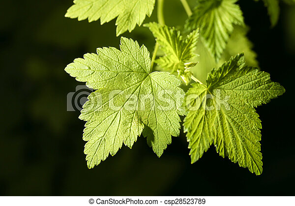 leaves on a black background. close - csp28523789