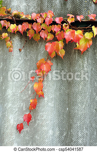 Leaves on a twig in autumn colors. - csp54041587
